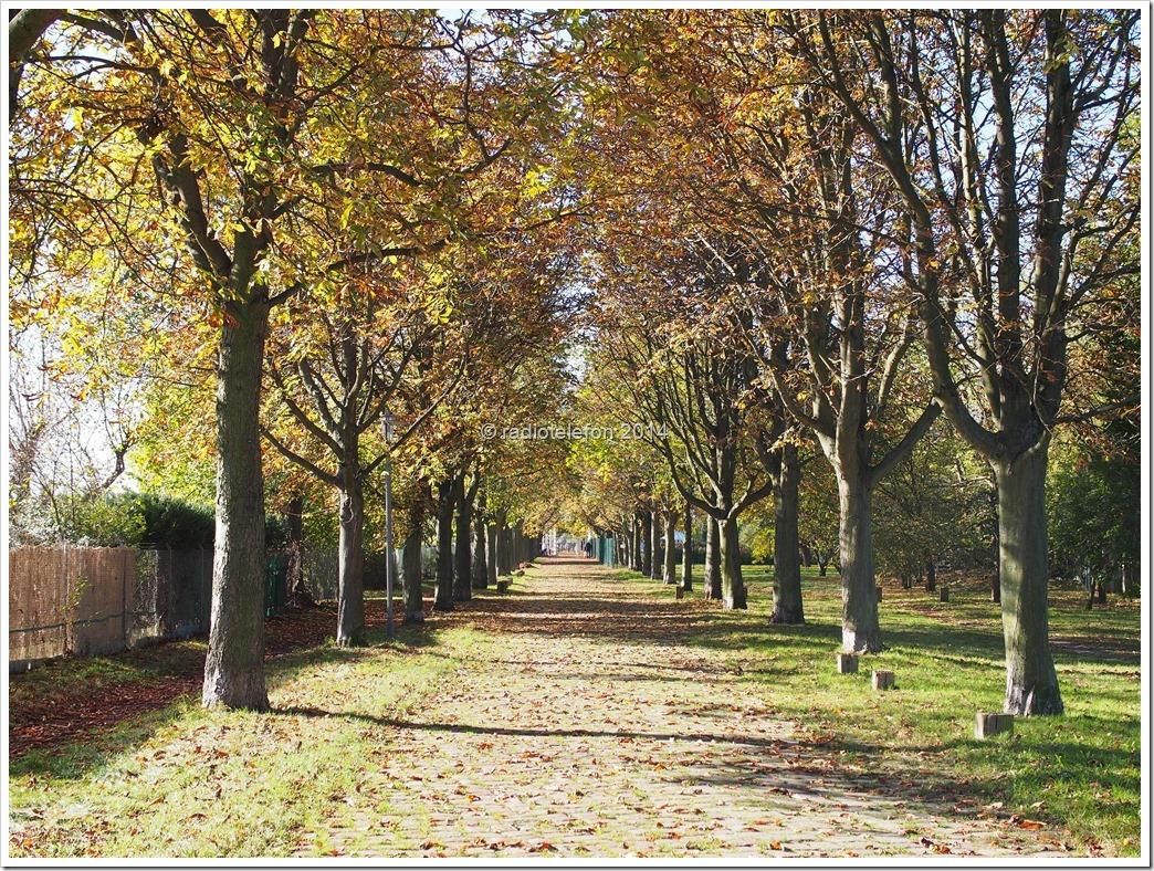 Berlin Britzer Garten Dahlienfeuer