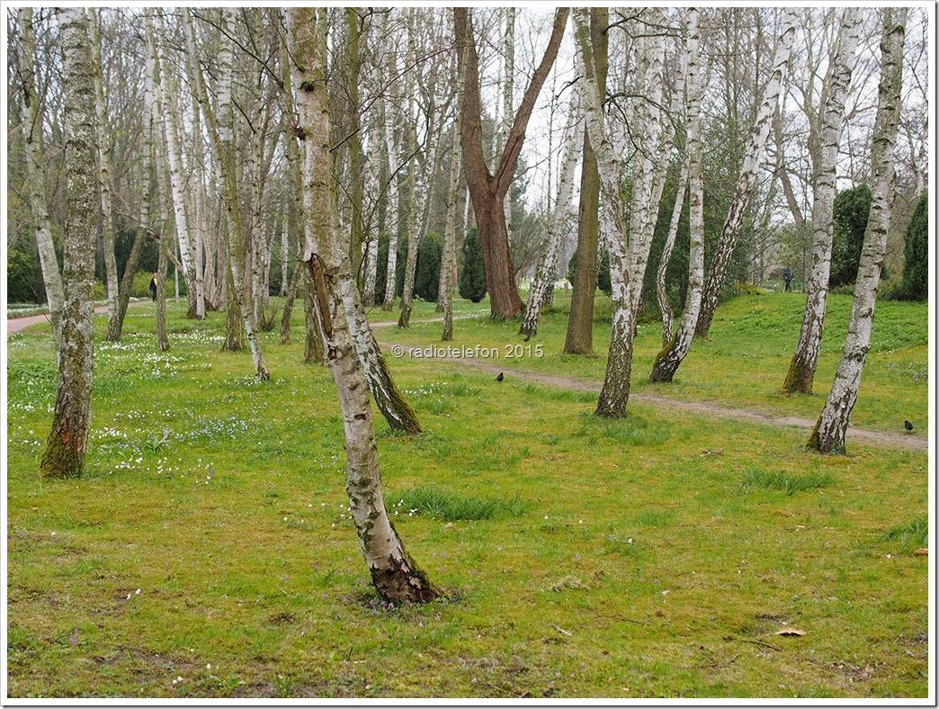 Britzer Garten Birken